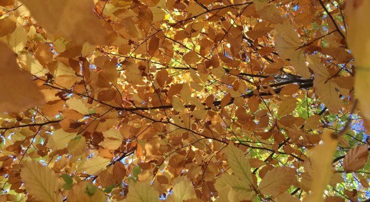 Lass die Blätter Tanzen
